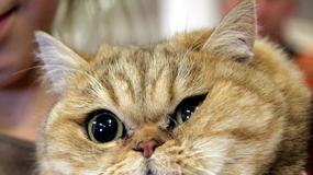 Rasowe myszy i koty