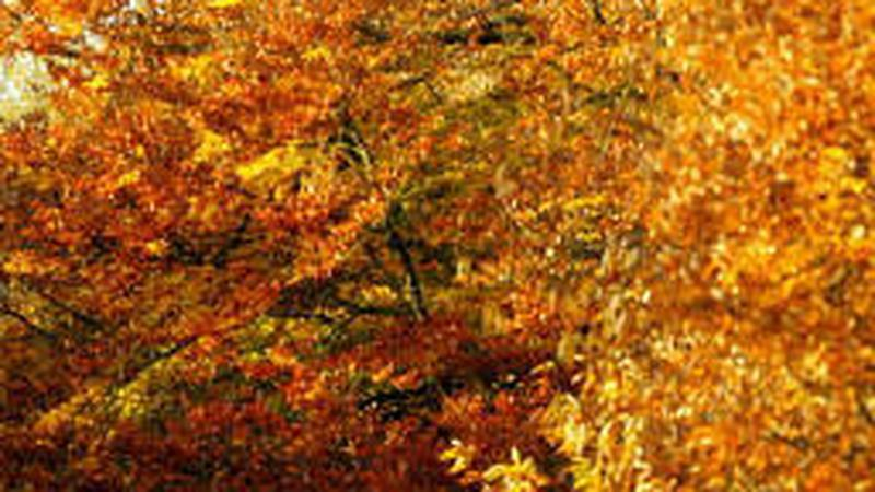 Złota jesień / 07.jpg