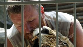 W klatce z lwicami