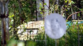 Czarnobyl i Prypeć - co zobaczysz w wymarłym mieście?