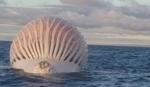 Čudna kugla u okeanu potpuno zbunila ribare u Australiji: Da li je SA OVOG SVETA?