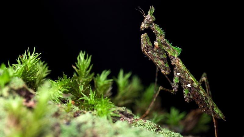 Egy bogár élete / Fotó: Profimedia-Reddot