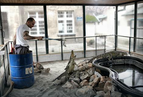 Bure kao zaštita: Aleksandar Rakočević hrani sve reptile