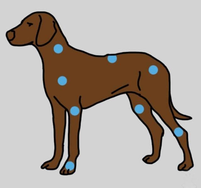 Kutya diszplázia okai, tünetei és kezelése - A kutya csípőizületi diszplázia