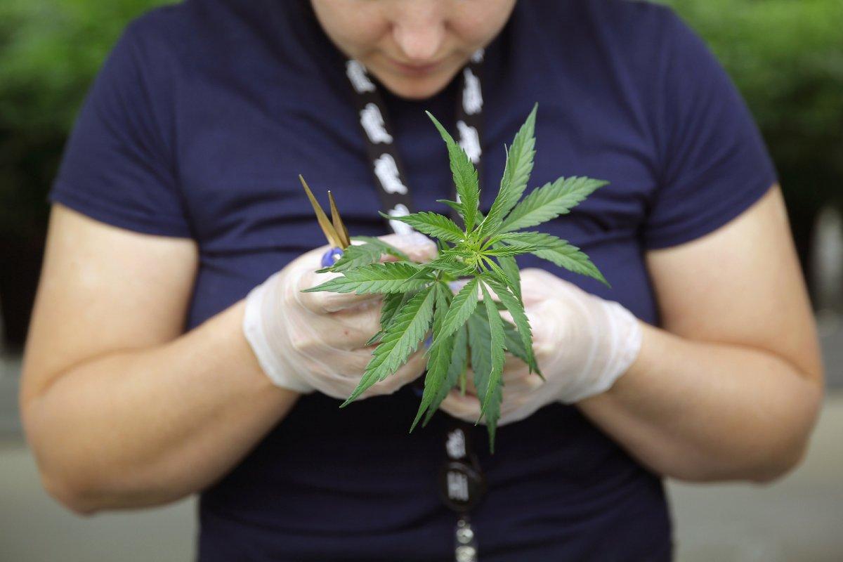marihuanos akcijų opcionai kanada
