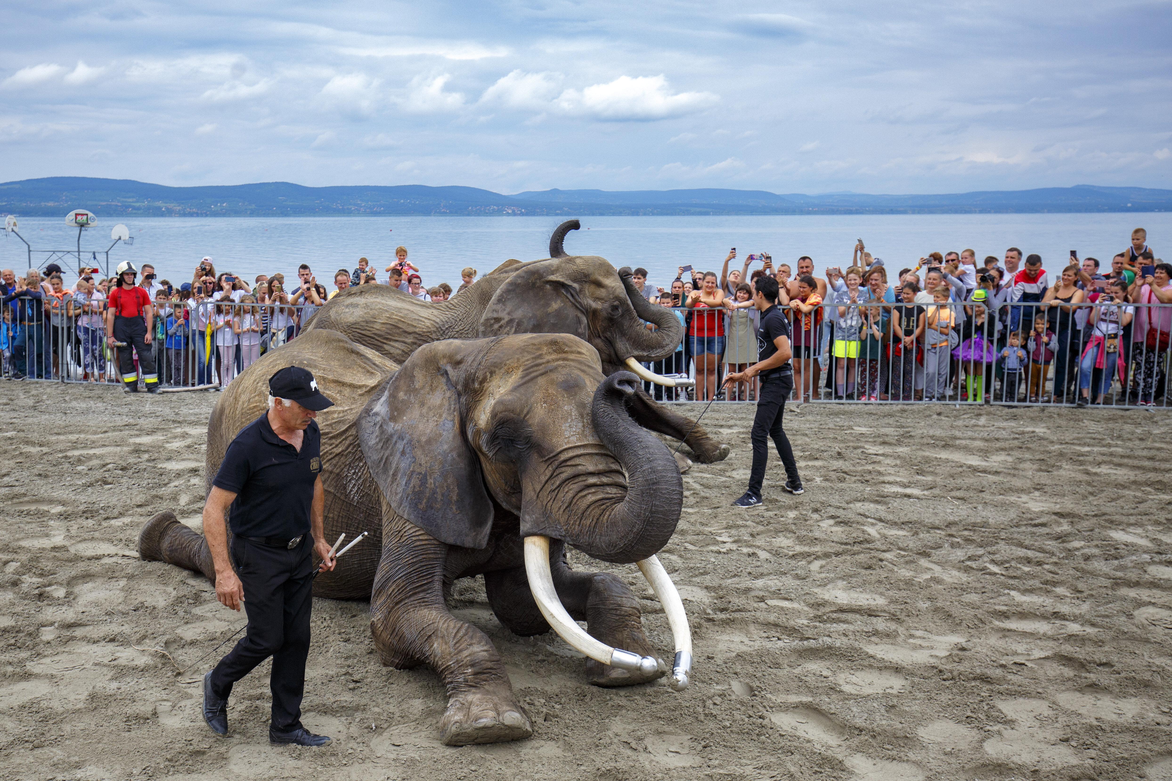 Szinte mindenhol tiltják, mégis virágzik a kereskedelem a veszélyeztetett állatok csontjaival