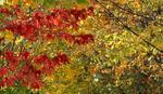 Jesen počinje u nedelju u 22.44 sati
