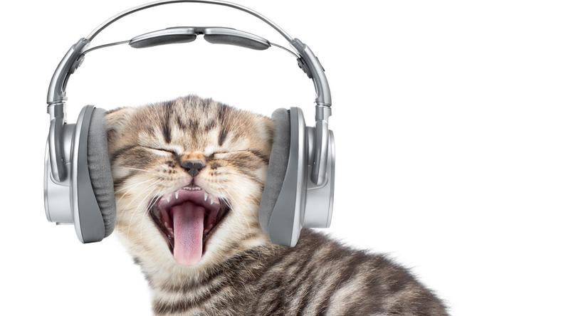 A cicák a macskazenét szeretik /Fotó: Northfoto