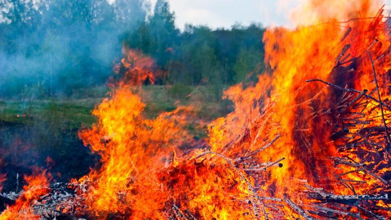 50 millió négyzetméternyi erdőt és szabadteret érintett tűzeset /Fotó: Northfoto