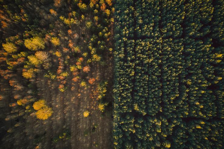 Erdőirtás / Fotó: Northfoto