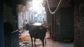 Indie o poranku
