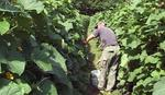 Uzgoj kornišona šansa za prijedorske poljoprivrednike: Zagarantovan otkup, a i zarada