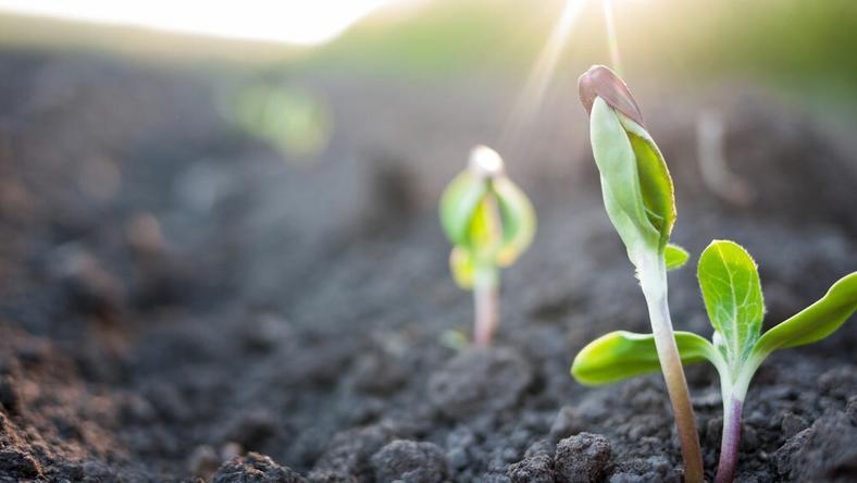 210 hektáros földet nyert el az óvónő /Fotó: Northfoto