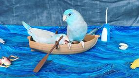 Minijaturni svet Pileta i Stena: Ovi papagaji ŽIVE BAJKU