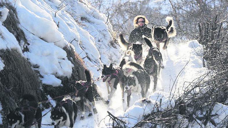 Ottó 11 kutyával dolgozik, de a versenyre 16 fős lesz falkája