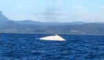 """Ekspedicija iz Australije u šoku pred retkim otkrićem: """"Potpuno neverovatan, nestvaran prizor"""""""