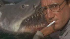 """Rekin ze """"Szczęk"""" odnalazł się... na śmietniku"""