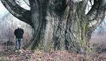 Ovo je najdeblje drvo u Srbiji