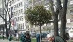 U Krunskoj ulici biće zasađeno 11 stabala lipe