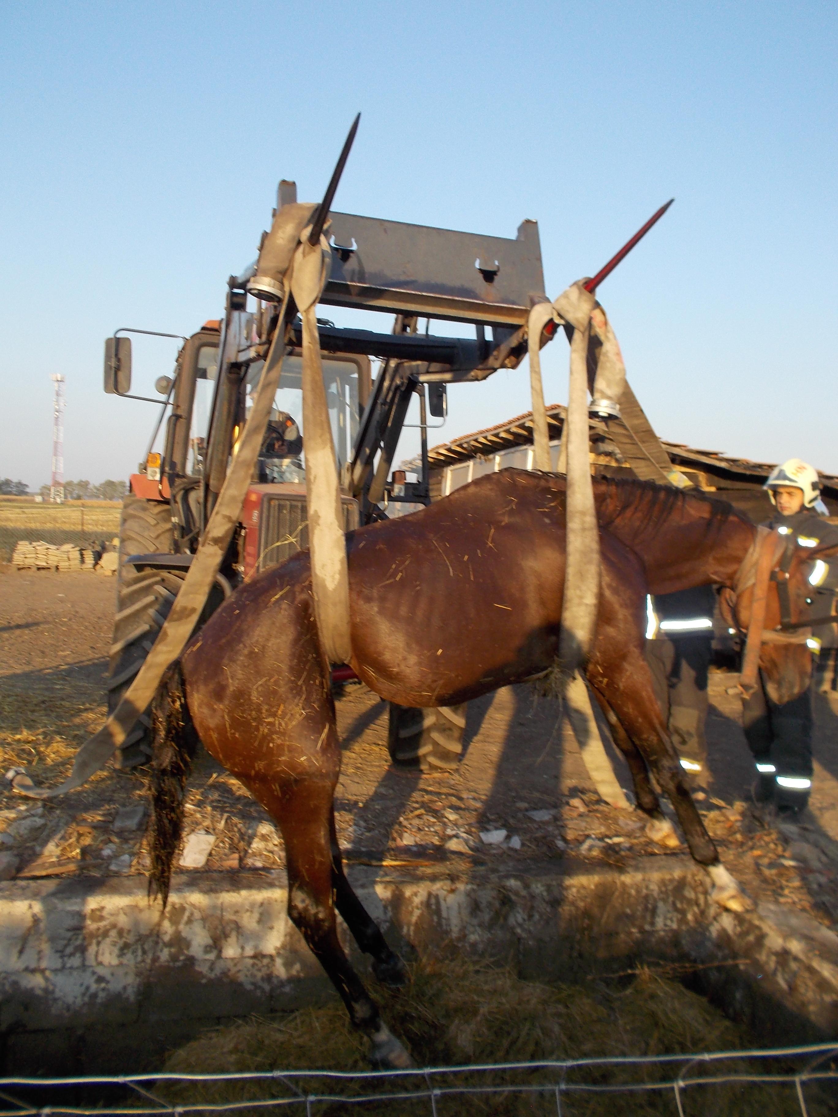 Szegény paci  emésztőgödörbe esett egy ló Görbeházán ae1100ba60