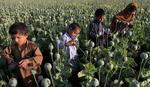 Rusija: Avganistanski heroin preko Turske i Balkana stiže u Evropsku uniju