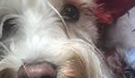 BAHATA VOŽNJA U CENTRU GRADA: Taksi pregazio  psića na pešačkom prelazu