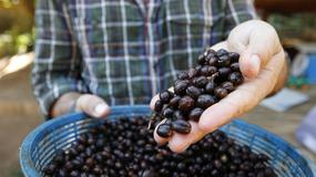 Tajlandia - Black Ivory - najdroższa kawa na świecie