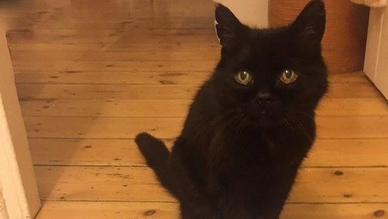 Ő itt az internet legmelankólikusabb cicája /Forrás: Facebook