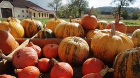 Austria szykuje się na Halloween
