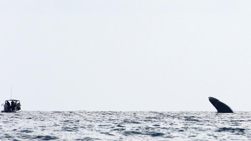 Gyilkosbálna és a csónak /Fotó: Profimedia-Reddot