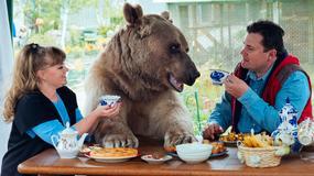 Rosyjska para mieszka z ponad dwumetrowym niedźwiedziem