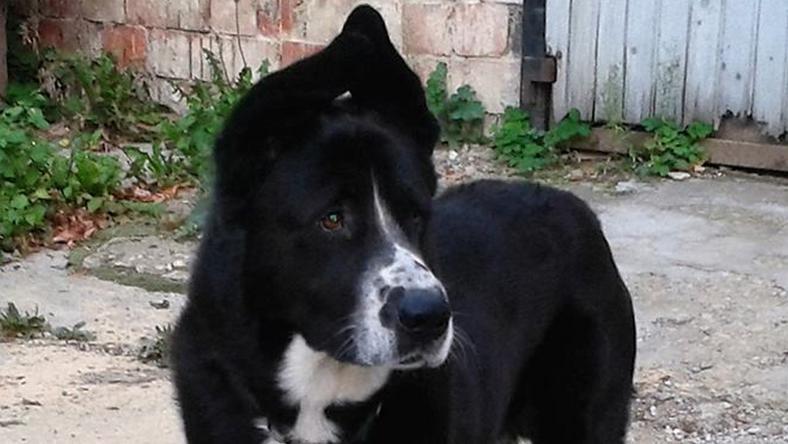 Buksi kutyát sokáig ennek a képnek az alapján keresték, végül holtan került elő