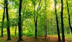 ČUVAJMO PRIRODU Danas je Svetski dan zaštite životne sredine