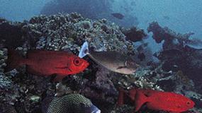Gdzie nurkować: Sipadan, Malezja