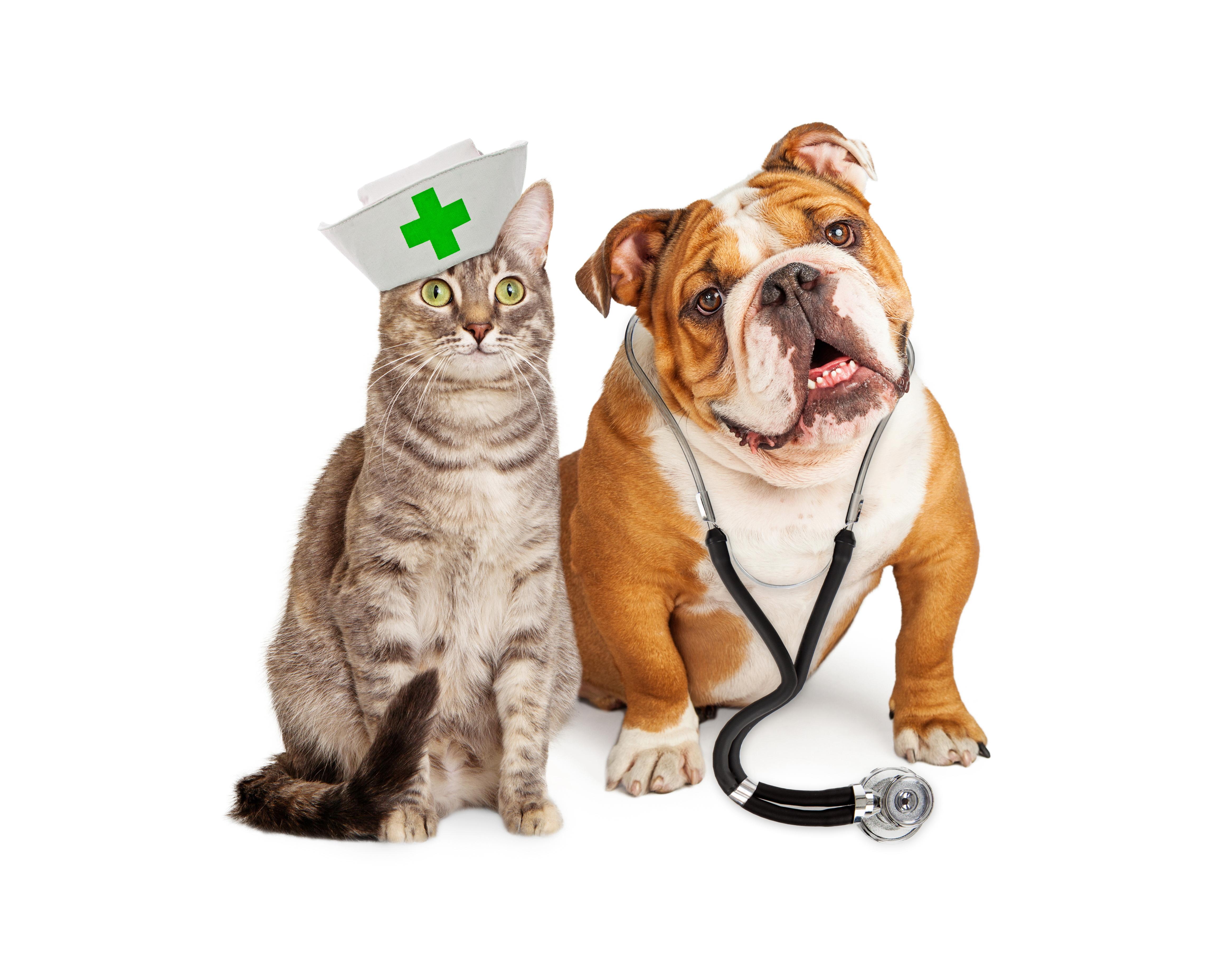 találjon gyógyszert ízületekre csípő neuralgia tünetei és kezelése