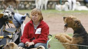 Wystawa psów w Będzinie