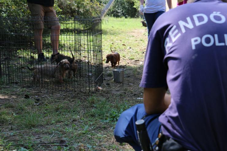 A feltételezett elkövetők elszámoltatása jelenleg is folyamatban van /Fotó: police.hu