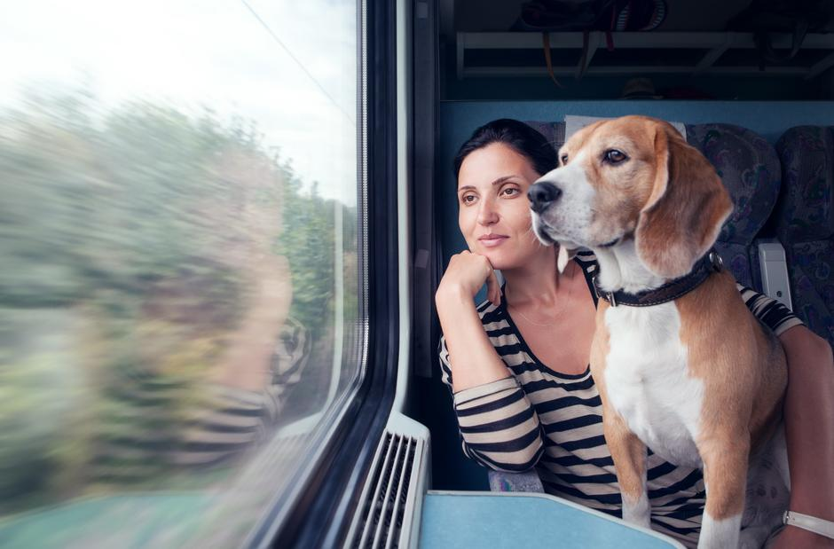 Podróz pociągiem z psem