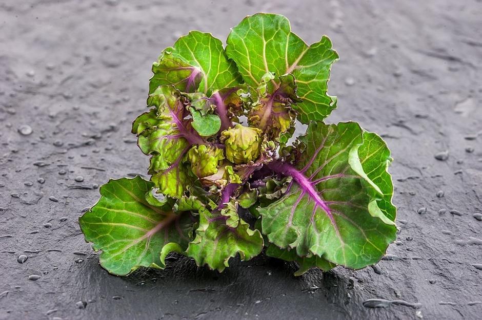 Kalerosse - nowe warzywo w kuchni