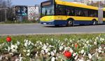 OSVRNITE SE Proleće je stiglo, VESNICI su svuda oko nas (FOTO)