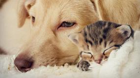 Choroby, którymi można zarazić się od psa lub kota: giardioza, wścieklizna, grzybice, bąblowica