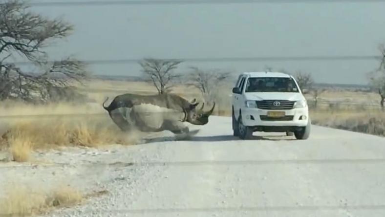 A megerősített autóban ülő turisták szerencsére nem sérültek /Fotó: Profimedia-Reddot