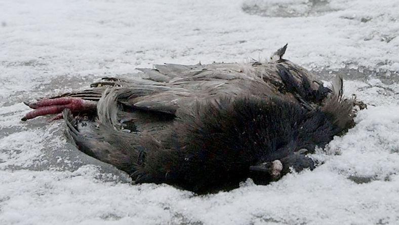 Több tucat védett madárral végeztek/Fotó-MTI