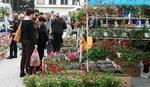 Sajam cveća u parku Manjež od 6. do 15. maja