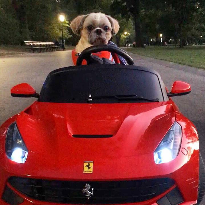 Na meg egy Ferrarija. /Fotó: Northfoto