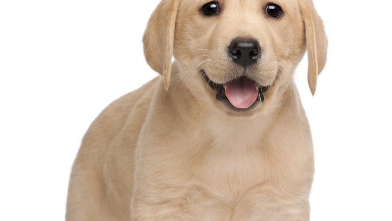 Szerencsétlen kutyát gazdája kínozta és ölte meg/Illusztráció: Shutterstock