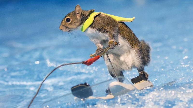 Twiggy a mókus / Fotó: Northfoto