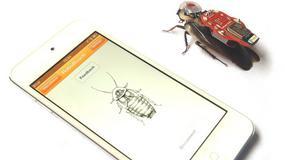 Powstał karaluch - cyborg