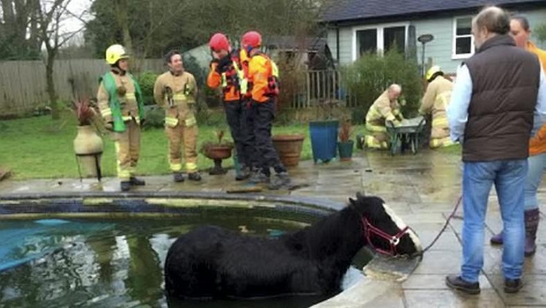 Szegény ló nem önszántából mártózott meg a medencében – beleesett / Fotó: Northfoto