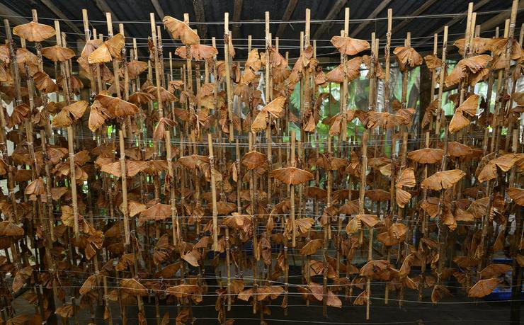 Hernyóselyem előállítása Indiában / Fotó: MTI